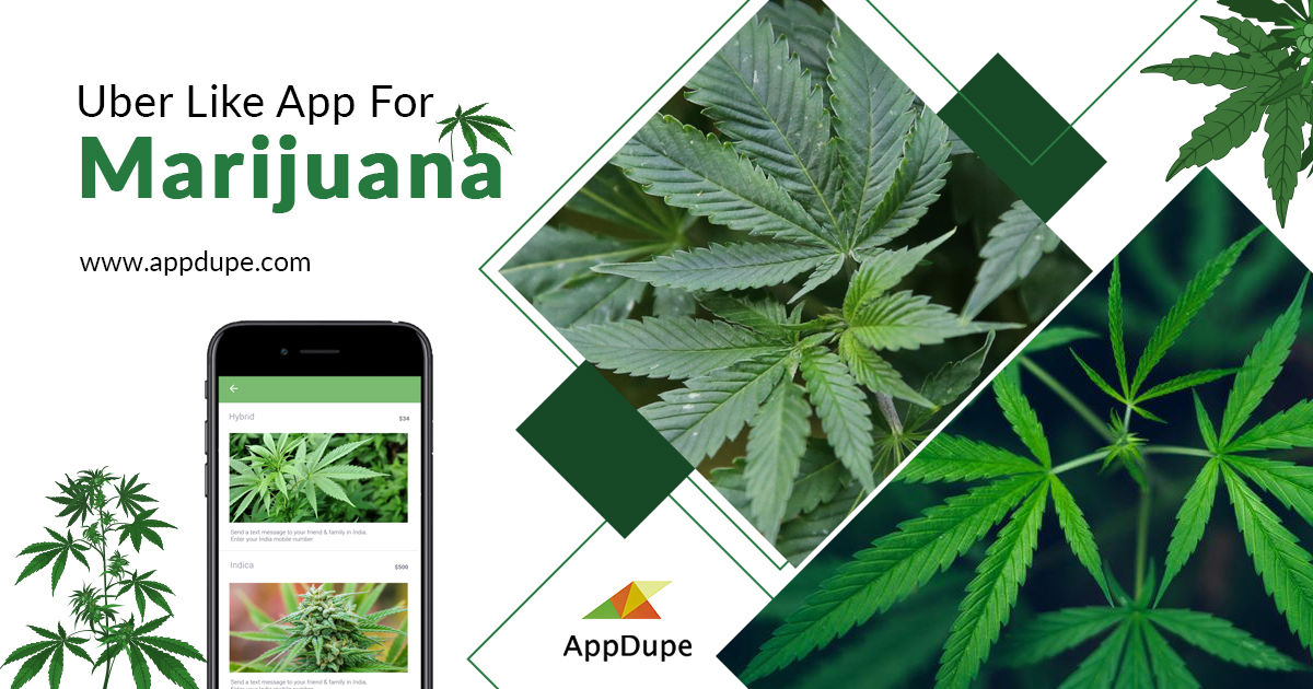 An on-demand cannabis delivery app helps entrepreneurs impress millions of drug lovers
